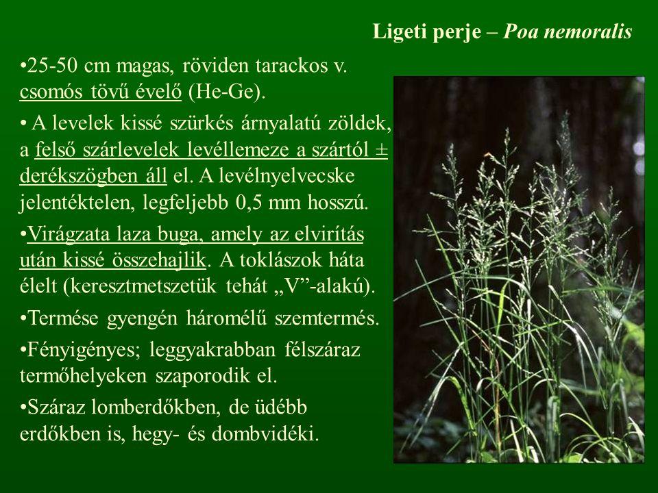 Ligeti perje – Poa nemoralis 25-50 cm magas, röviden tarackos v. csomós tövű évelő (He-Ge). A levelek kissé szürkés árnyalatú zöldek, a felső szárleve