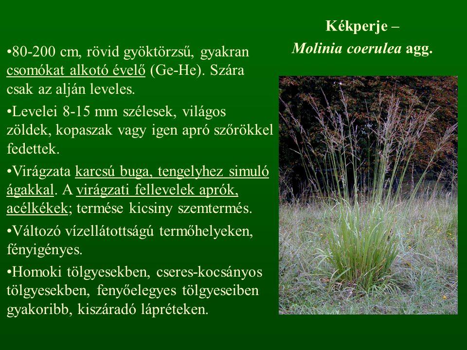 Kékperje – Molinia coerulea agg. 80-200 cm, rövid gyöktörzsű, gyakran csomókat alkotó évelő (Ge-He). Szára csak az alján leveles. Levelei 8-15 mm szél