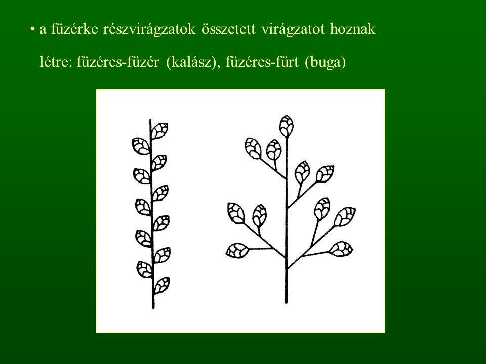 kalász virágzat: Brachypodium, Agropyron, Hordelymus laza bugavirágzat: Bromus, Festuca, Stipa, Dactylis, Melica, Molinia, Milium, Deschampsia, Agrostis, Calamagrostis, Phragmites, Arrhenatherum, Poa