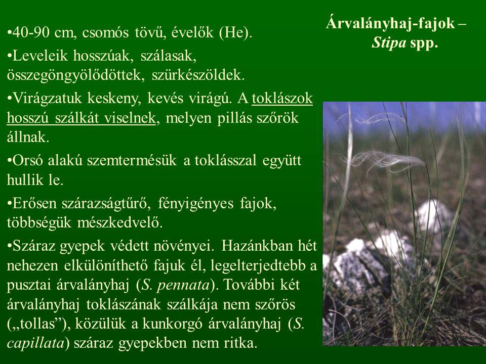 40-90 cm, csomós tövű, évelők (He). Leveleik hosszúak, szálasak, összegöngyölődöttek, szürkészöldek. Virágzatuk keskeny, kevés virágú. A toklászok hos
