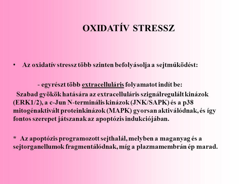 Az oxidatív stressz több szinten befolyásolja a sejtműködést: - egyrészt több extracelluláris folyamatot indít be: Szabad gyökök hatására az extracell