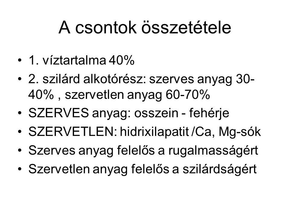 A csontok összetétele 1. víztartalma 40% 2. szilárd alkotórész: szerves anyag 30- 40%, szervetlen anyag 60-70% SZERVES anyag: osszein - fehérje SZERVE