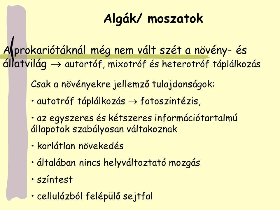 Chrysophyta / Sárgásmoszatok törzse Ide tartoznak: gombostűfej-moszatok és a kovamoszatok Gombostűfej-moszatok: nedves talajon 1-2 mm átmérőjű zöld egysejtű gömböcskék Kovamoszatok: szilícium-dioxidból álló héj a moszat pusztulása után kovaföldet vagy diatomaföldet alkot Magyarországon 1500 fajuk él