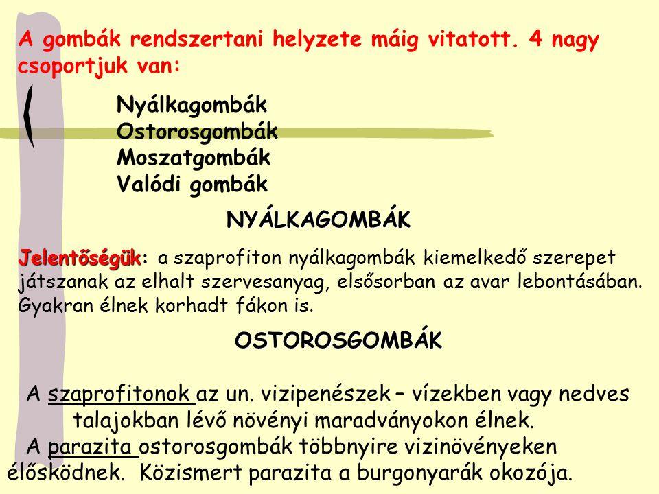 Nyálkagombák Ostorosgombák Moszatgombák Valódi gombák A gombák rendszertani helyzete máig vitatott. 4 nagy csoportjuk van: NYÁLKAGOMBÁK Jelentőségük J