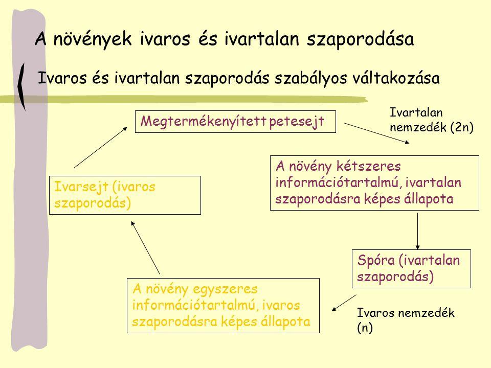 Bryophyta / Mohák törzse Kezdetleges hajtásos növények - zöldmoszatokból Evolúciós zsákutca.