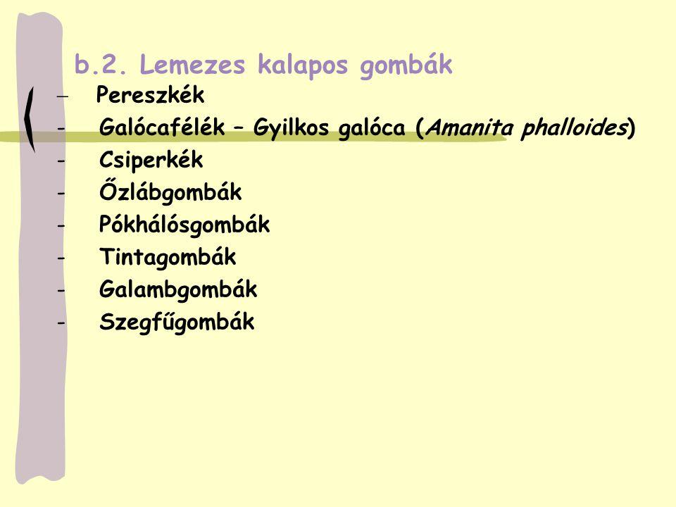  Pereszkék - Galócafélék – Gyilkos galóca (Amanita phalloides) - Csiperkék - Őzlábgombák - Pókhálósgombák - Tintagombák - Galambgombák - Szegfűgombák