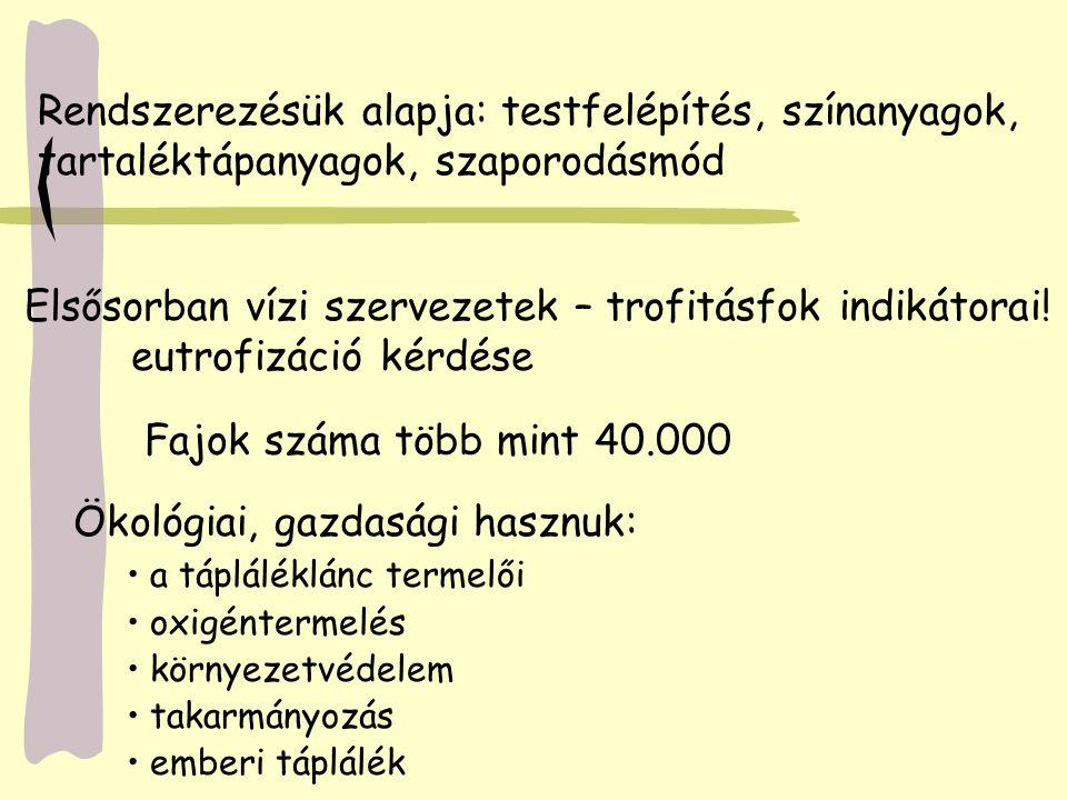  Pereszkék - Galócafélék – Gyilkos galóca (Amanita phalloides) - Csiperkék - Őzlábgombák - Pókhálósgombák - Tintagombák - Galambgombák - Szegfűgombák b.2.
