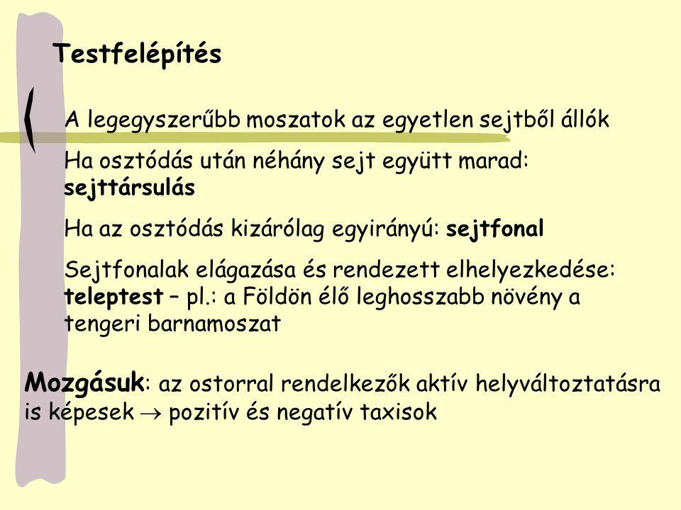 Diatoma Asterionella Cymbela Kovamoszatok
