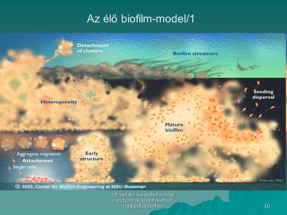 Útmutató ivóvízbiztonsági rendszerek kiépítéséhez, működtetéséhez 10 Az élő biofilm-model/1