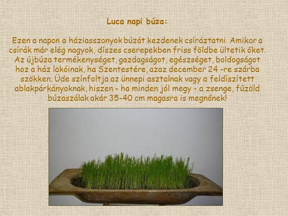 Luca napi búza: Ezen a napon a háziasszonyok búzát kezdenek csíráztatni. Amikor a csírák már elég nagyok, díszes cserepekben friss földbe ültetik őket