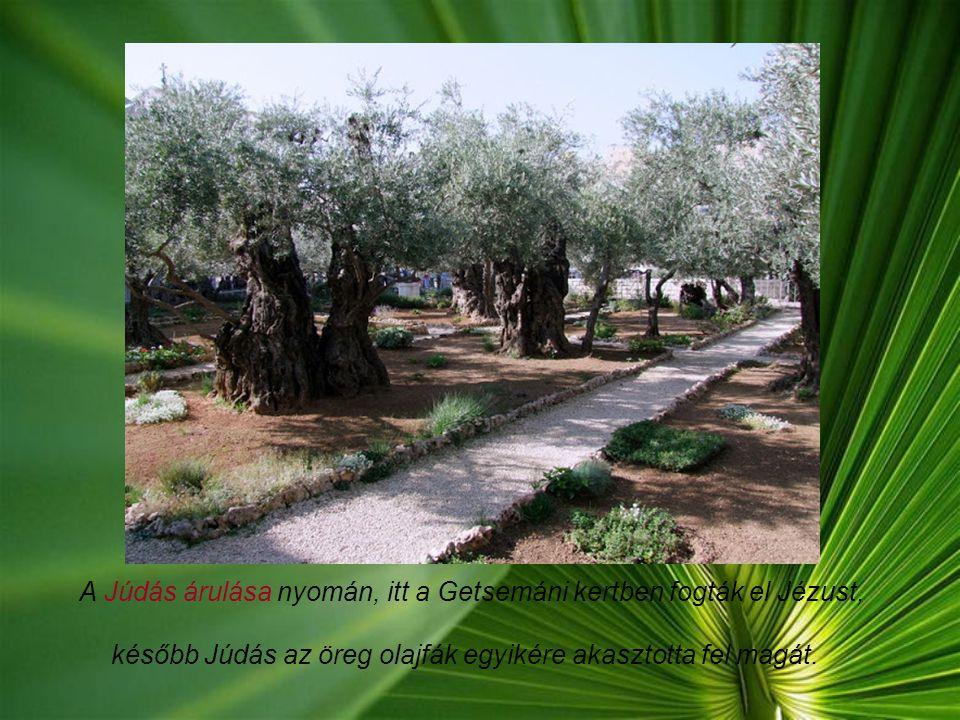 A Getsemáni kert: Jézus az Olajfák hegyén levő Getsemáni nevű majorba ment az utolsó vacsora után, ahová Jeruzsálem lakossága az olajbogyót hordta. A