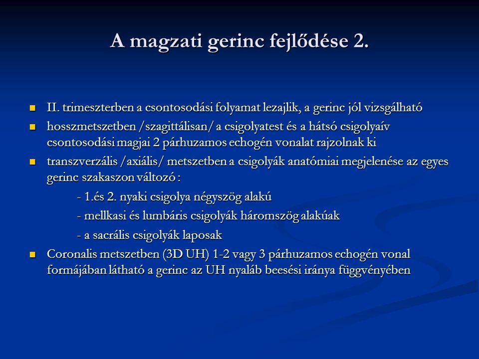 A magzati gerinc fejlődése 2.II.