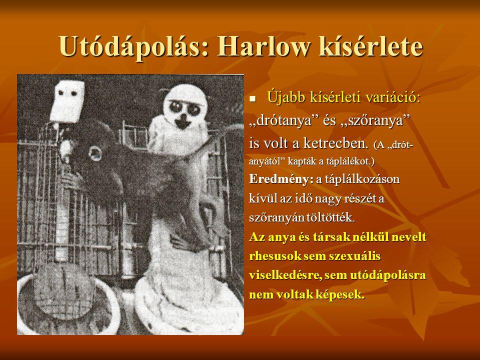 """Utódápolás: Harlow kísérlete Újabb kísérleti variáció: Újabb kísérleti variáció: """"drótanya"""" és """"szőranya"""" is volt a ketrecben. (A """"drót- anyától"""" kapt"""