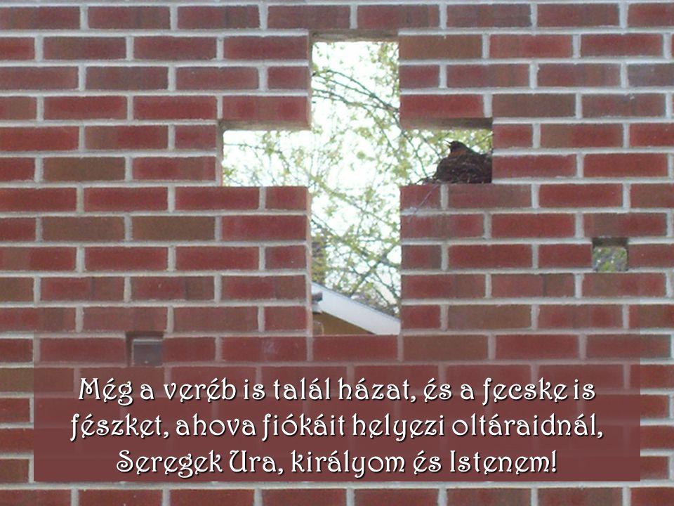 Még a veréb is talál házat, és a fecske is fészket, ahova fiókáit helyezi oltáraidnál, Seregek Ura, királyom és Istenem!