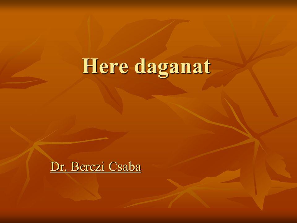 Here daganat Dr. Berczi Csaba