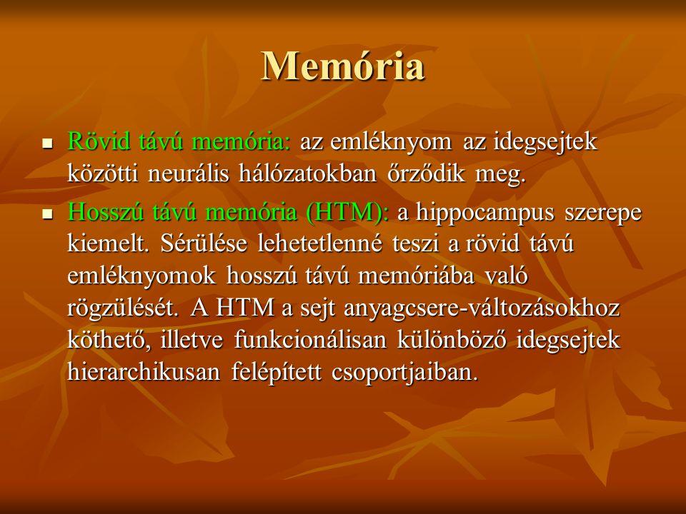 Memória Rövid távú memória: az emléknyom az idegsejtek közötti neurális hálózatokban őrződik meg. Rövid távú memória: az emléknyom az idegsejtek közöt