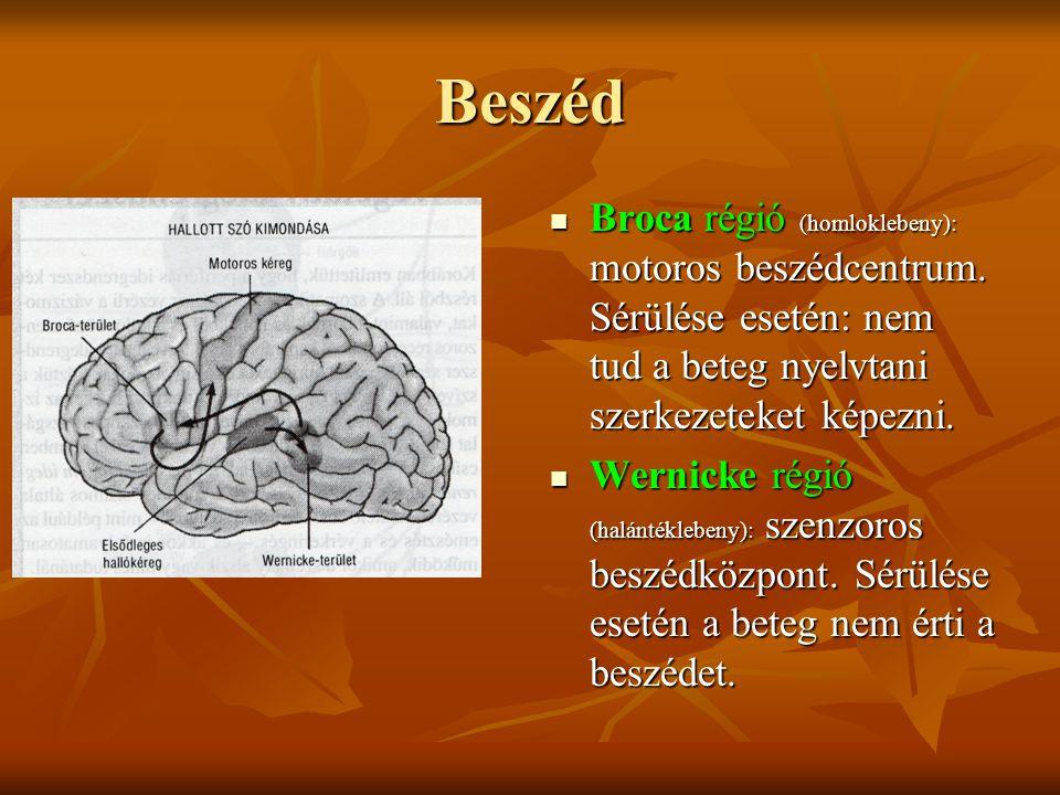 Beszéd Broca régió (homloklebeny): motoros beszédcentrum. Sérülése esetén: nem tud a beteg nyelvtani szerkezeteket képezni. Broca régió (homloklebeny)