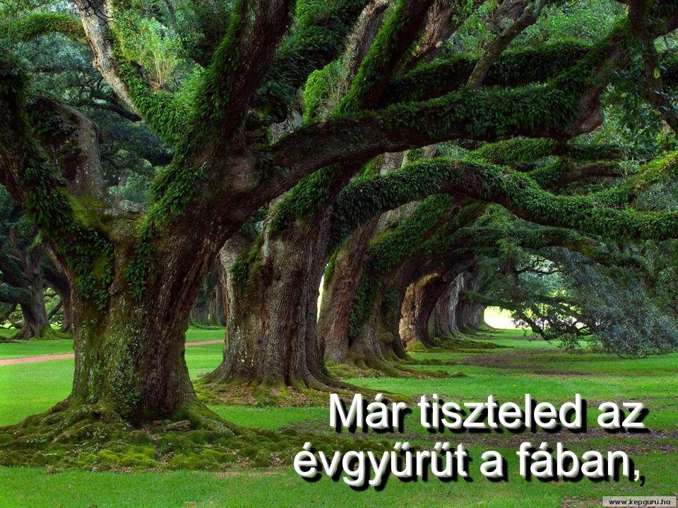 Már tiszteled az évgyűrűt a fában Már tiszteled az évgyűrűt a fában,