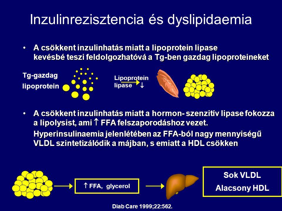 Inzulinrezisztencia és dyslipidaemia A csökkent inzulinhatás miatt a lipoprotein lipase kevésbé teszi feldolgozhatóvá a Tg-ben gazdag lipoproteineketA