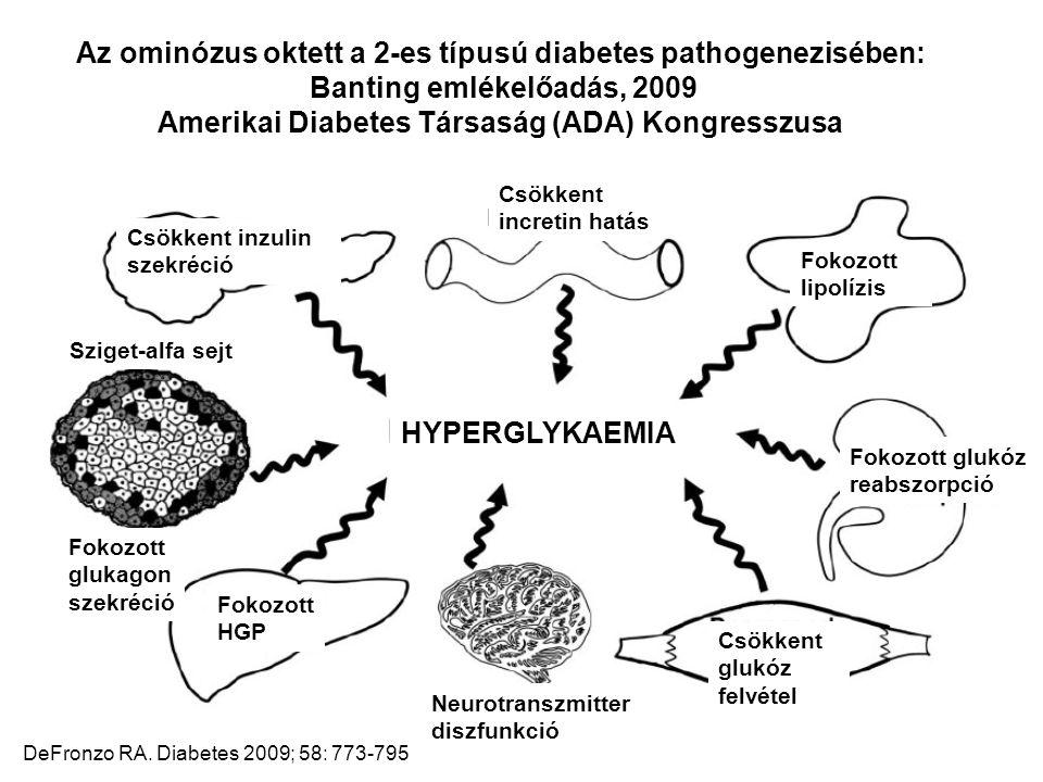 Csökkent incretin hatás Csökkent inzulin szekréció Fokozott lipolízis Sziget-alfa sejt Fokozott glukagon szekréció Fokozott HGP HYPERGLYKAEMIA Fokozot