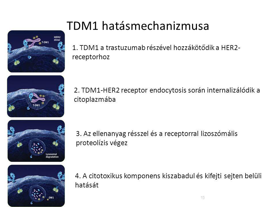 15 TDM1 hatásmechanizmusa 1. TDM1 a trastuzumab részével hozzákötődik a HER2- receptorhoz 2. TDM1-HER2 receptor endocytosis során internalizálódik a c