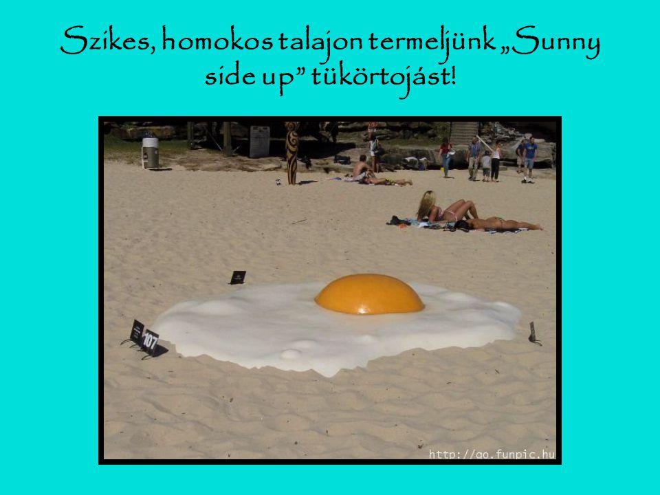"""Szikes, homokos talajon termeljünk """"Sunny side up tükörtojást!"""