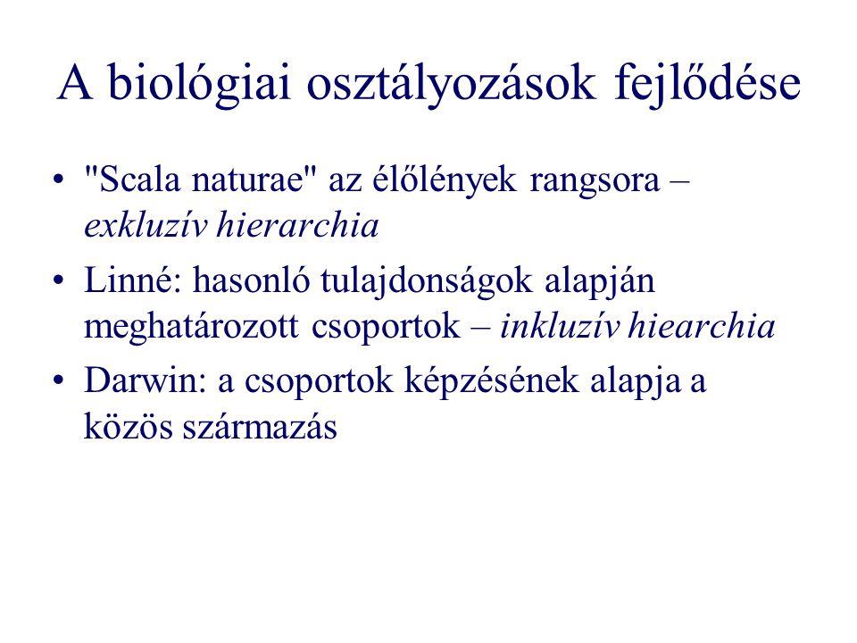 A biológiai osztályozások fejlődése Scala naturae az élőlények rangsora – exkluzív hierarchia Linné: hasonló tulajdonságok alapján meghatározott csoportok – inkluzív hiearchia Darwin: a csoportok képzésének alapja a közös származás