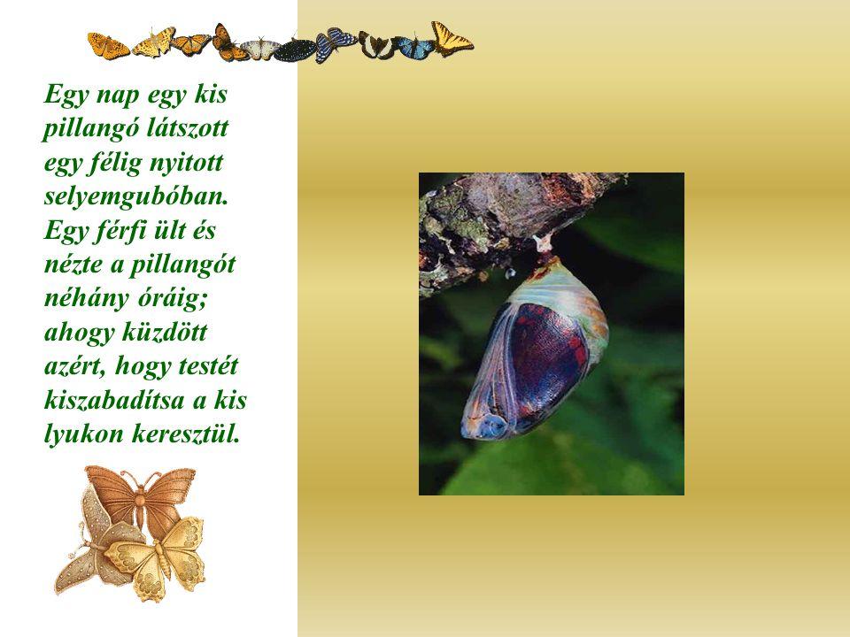 Egy nap egy kis pillangó látszott egy félig nyitott selyemgubóban. Egy férfi ült és nézte a pillangót néhány óráig; ahogy küzdött azért, hogy testét k