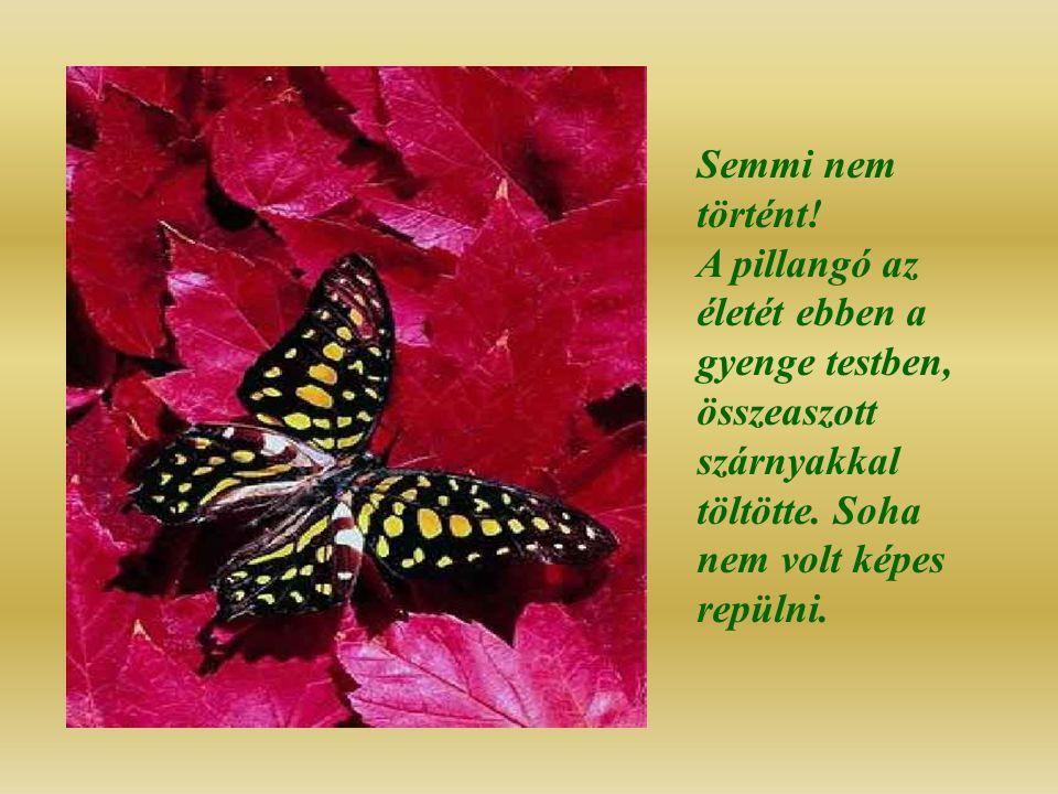 Semmi nem történt.A pillangó az életét ebben a gyenge testben, összeaszott szárnyakkal töltötte.
