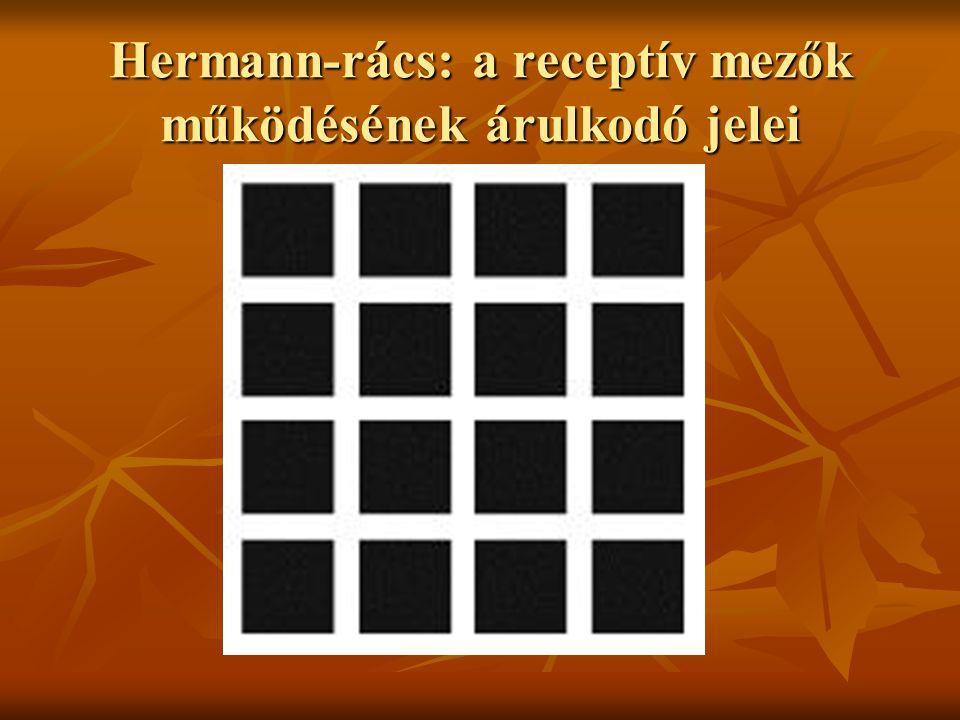 Hermann-rács: a receptív mezők működésének árulkodó jelei