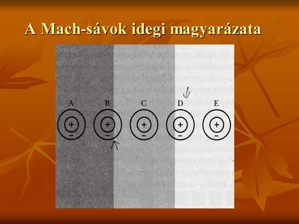 A Mach-sávok idegi magyarázata A Mach-sávok idegi magyarázata