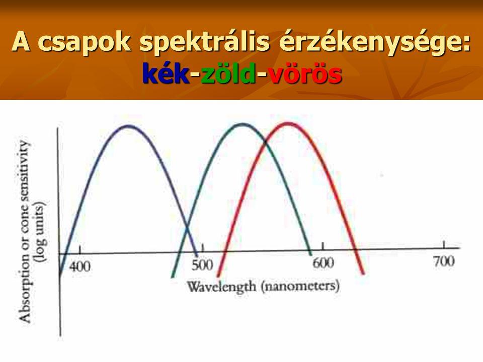 A csapok spektrális érzékenysége: kék-zöld-vörös