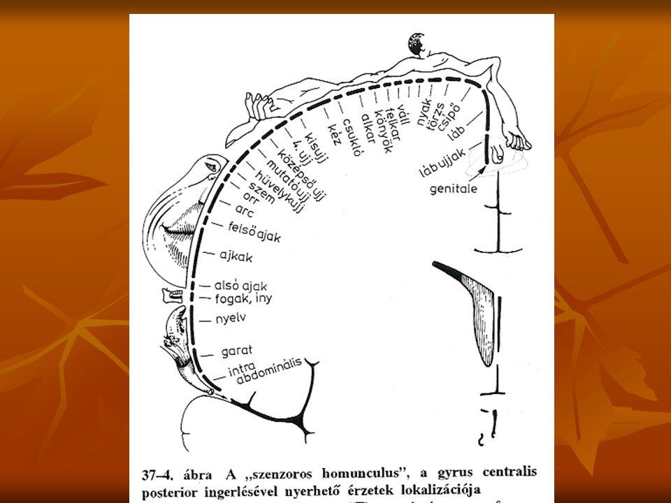 Akkomodáció (monokuláris statikus jelzőmozzanat)