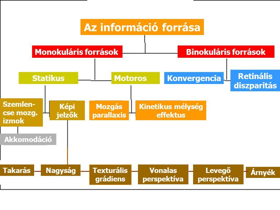 Az információ forrása Monokuláris forrásokBinokuláris források StatikusMotorosKonvergencia Retinális diszparitás Szemlen- cse mozg. izmok Képi jelzők