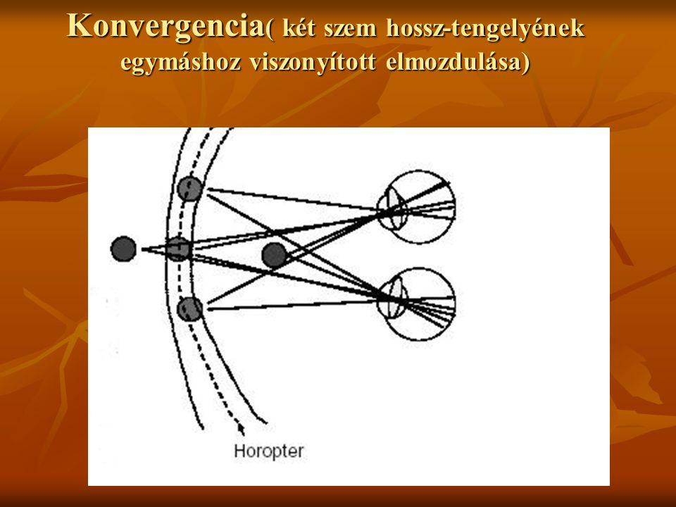 Konvergencia ( két szem hossz-tengelyének egymáshoz viszonyított elmozdulása)