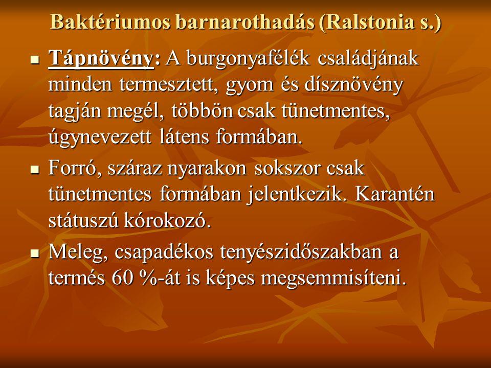 Baktériumos barnarothadás (Ralstonia s.) Tápnövény: A burgonyafélék családjának minden termesztett, gyom és dísznövény tagján megél, többön csak tünetmentes, úgynevezett látens formában.