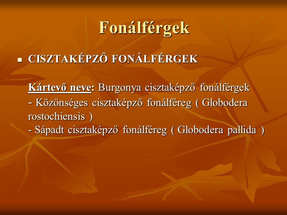 Fonálférgek CISZTAKÉPZŐ FONÁLFÉRGEK Kártevő neve: Burgonya cisztaképző fonálférgek - Közönséges cisztaképző fonálféreg ( Globodera rostochiensis ) - Sápadt cisztaképző fonálféreg ( Globodera pallida ) CISZTAKÉPZŐ FONÁLFÉRGEK Kártevő neve: Burgonya cisztaképző fonálférgek - Közönséges cisztaképző fonálféreg ( Globodera rostochiensis ) - Sápadt cisztaképző fonálféreg ( Globodera pallida )