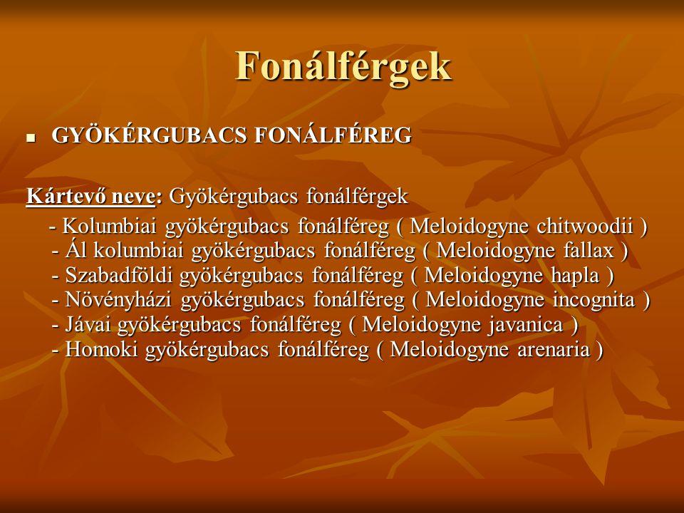 Fonálférgek GYÖKÉRGUBACS FONÁLFÉREG GYÖKÉRGUBACS FONÁLFÉREG Kártevő neve: Gyökérgubacs fonálférgek - Kolumbiai gyökérgubacs fonálféreg ( Meloidogyne chitwoodii ) - Ál kolumbiai gyökérgubacs fonálféreg ( Meloidogyne fallax ) - Szabadföldi gyökérgubacs fonálféreg ( Meloidogyne hapla ) - Növényházi gyökérgubacs fonálféreg ( Meloidogyne incognita ) - Jávai gyökérgubacs fonálféreg ( Meloidogyne javanica ) - Homoki gyökérgubacs fonálféreg ( Meloidogyne arenaria ) - Kolumbiai gyökérgubacs fonálféreg ( Meloidogyne chitwoodii ) - Ál kolumbiai gyökérgubacs fonálféreg ( Meloidogyne fallax ) - Szabadföldi gyökérgubacs fonálféreg ( Meloidogyne hapla ) - Növényházi gyökérgubacs fonálféreg ( Meloidogyne incognita ) - Jávai gyökérgubacs fonálféreg ( Meloidogyne javanica ) - Homoki gyökérgubacs fonálféreg ( Meloidogyne arenaria )