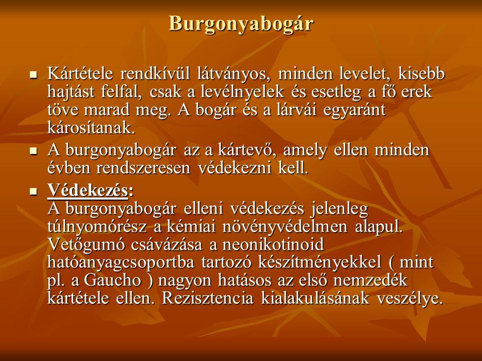 Burgonyabogár Kártétele rendkívül látványos, minden levelet, kisebb hajtást felfal, csak a levélnyelek és esetleg a fő erek töve marad meg.