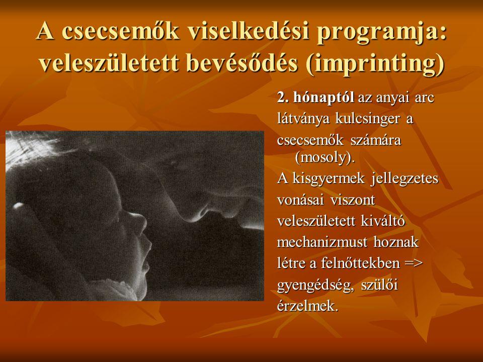 A csecsemők viselkedési programja: veleszületett bevésődés (imprinting) 2.