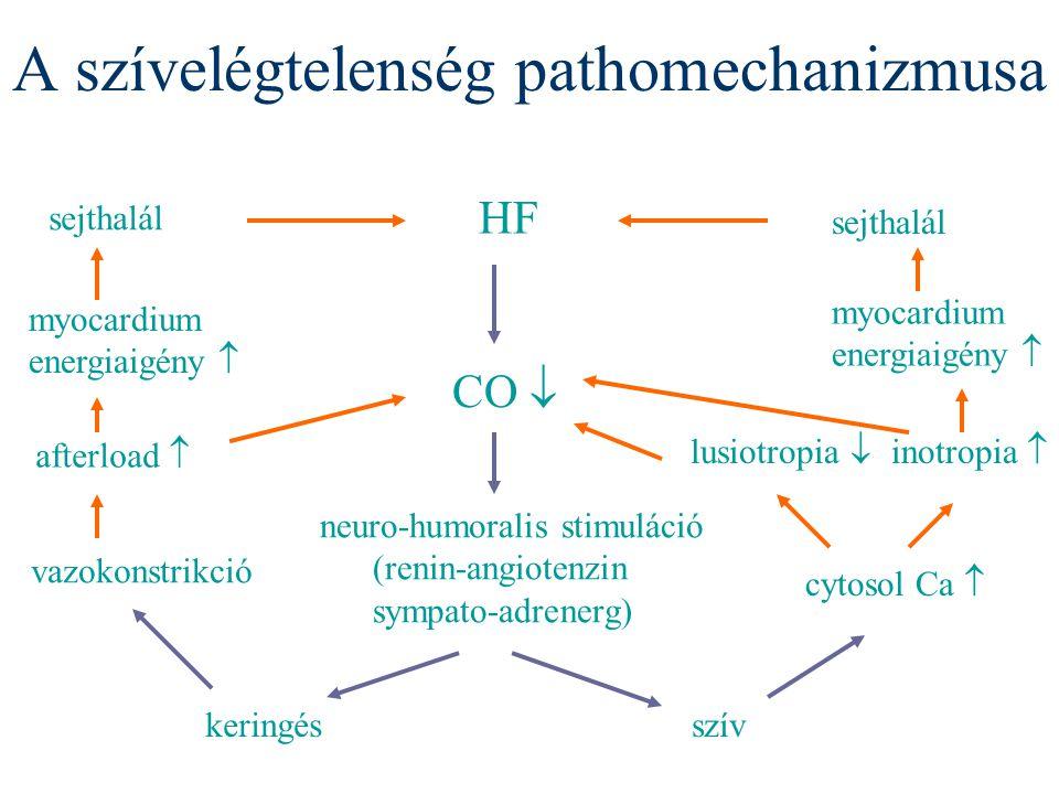 A szívelégtelenség pathomechanizmusa HF CO  neuro-humoralis stimuláció (renin-angiotenzin sympato-adrenerg) keringésszív vazokonstrikció afterload 