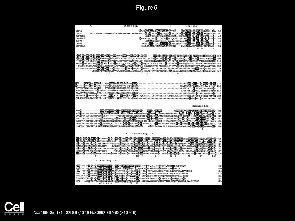 Figure 6 Cell 1996 85, 171-182DOI: (10.1016/S0092-8674(00)81094-6)