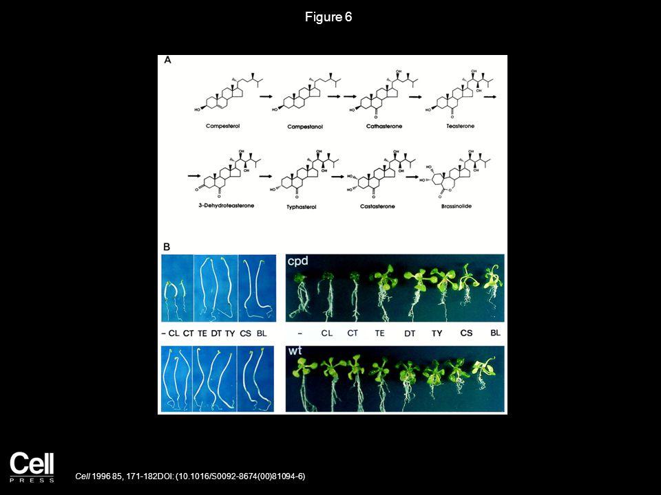 Figure 7 Cell 1996 85, 171-182DOI: (10.1016/S0092-8674(00)81094-6)