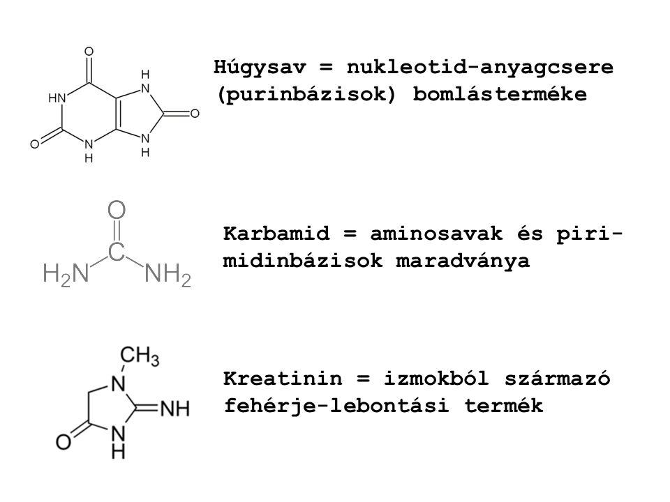 Húgysav = nukleotid-anyagcsere (purinbázisok) bomlásterméke Karbamid = aminosavak és piri- midinbázisok maradványa Kreatinin = izmokból származó fehér