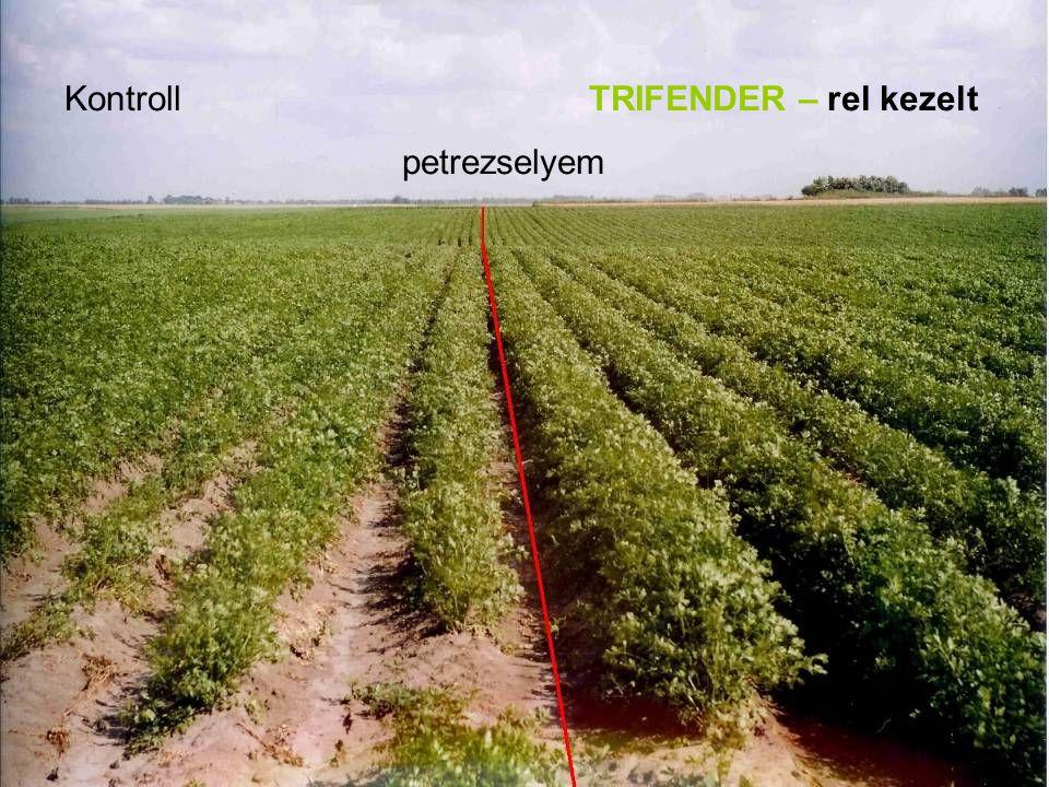 Kontroll TRIFENDER – rel kezelt petrezselyem