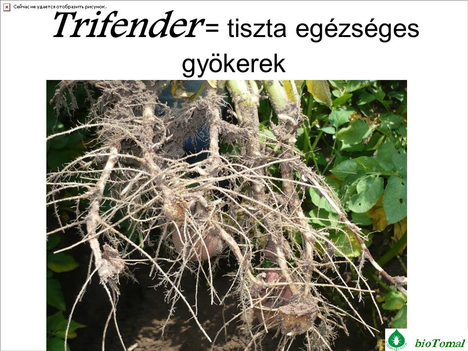 Trifender = tiszta egézséges gyökerek