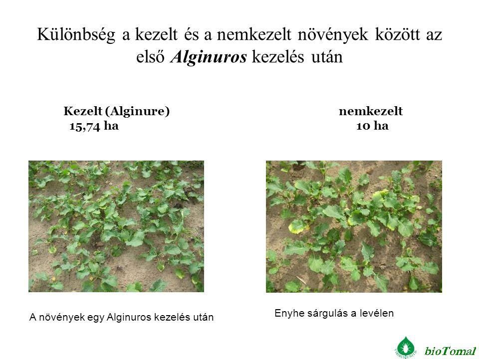 Különbség a kezelt és a nemkezelt növények között az első Alginuros kezelés után Kezelt (Alginure) nemkezelt 15,74 ha 10 ha A növények egy Alginuros k