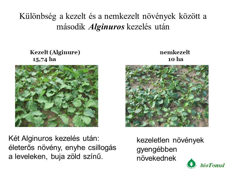 Két Alginuros kezelés után: életerős növény, enyhe csillogás a leveleken, buja zöld színű. kezeletlen növények gyengébben növekednek Kezelt (Alginure)