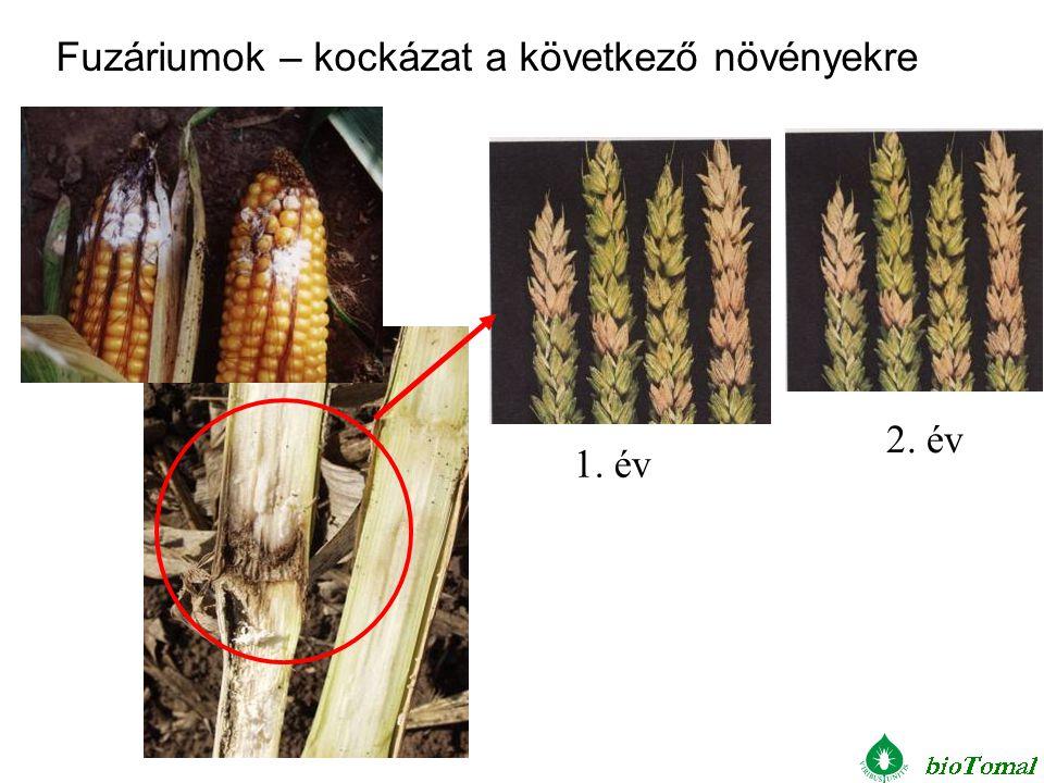 1. év 2. év Fuzáriumok – kockázat a következő növényekre