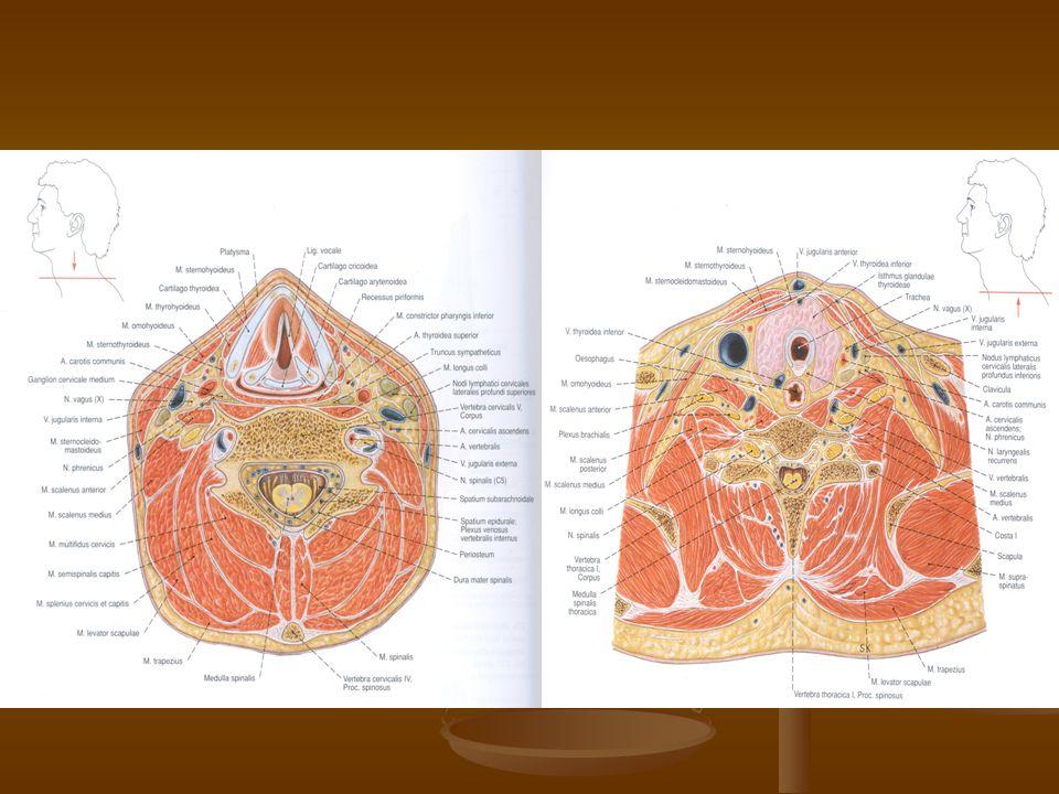 A légúti elzáródás ellátása gyógyszeres elsősegély laryngoscopia bronchoscopia conicotomia tracheostomia